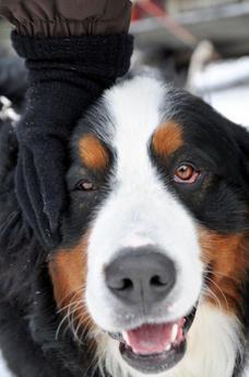dogsled26.jpg