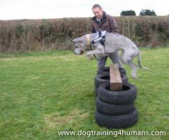 DogSchool (1 of 1)-69.jpg