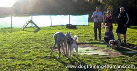 DogSchool (1 of 1)-41.jpg