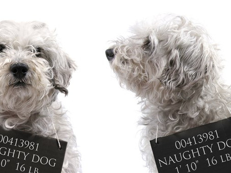 When Good Dogs Gone Bad (the real reason opens the door to handling)