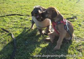 DogSchool (1 of 1)-144.jpg