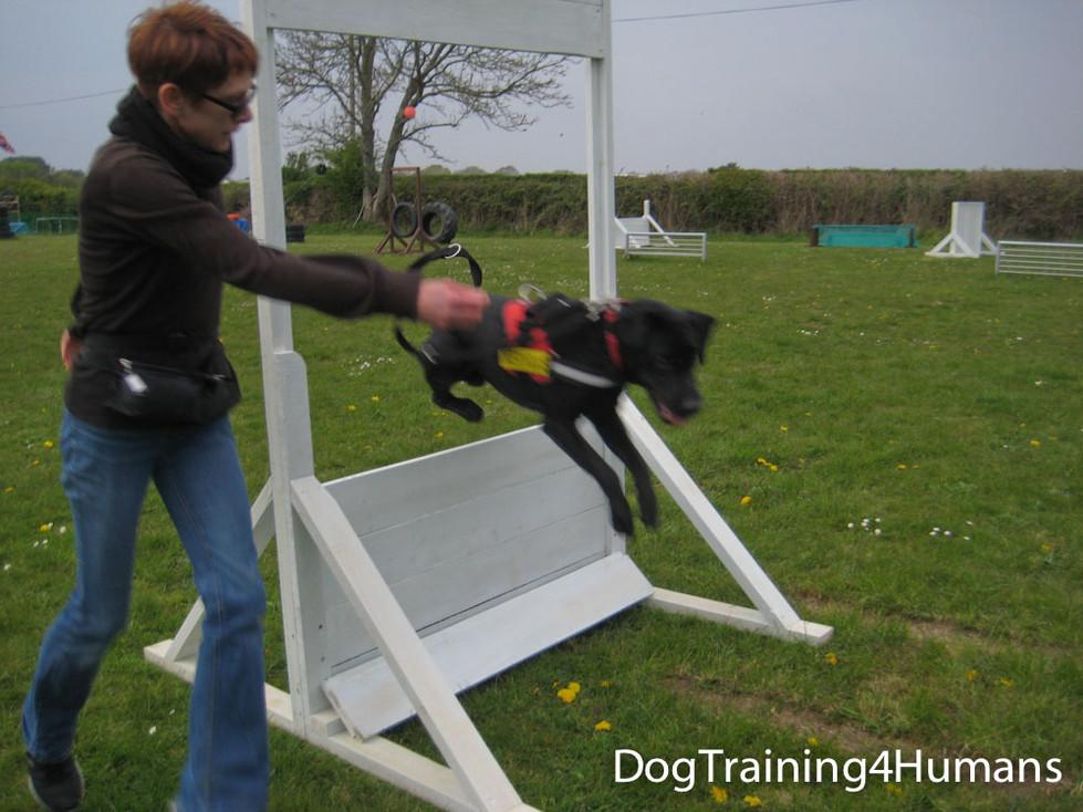 DogSchool (1 of 1)-424.jpg