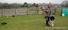 DogSchool (1 of 1)-202.jpg
