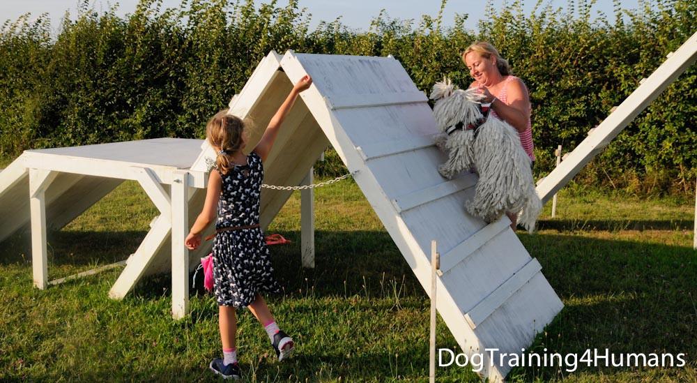 DogSchool (1 of 1)-912.jpg