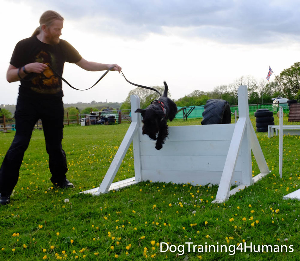 DogSchool (1 of 1)-541.jpg