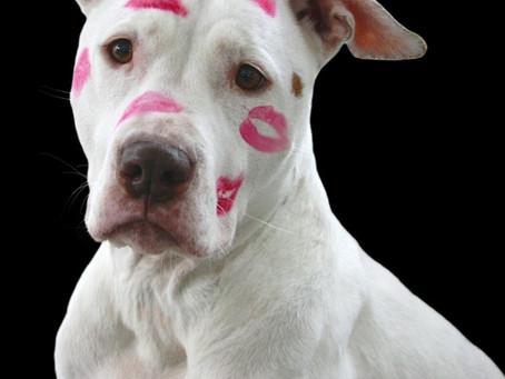 Isn't love enough? - The Daily Doggy Checklist