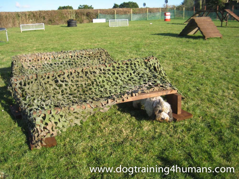 DogSchool (1 of 1)-153.jpg