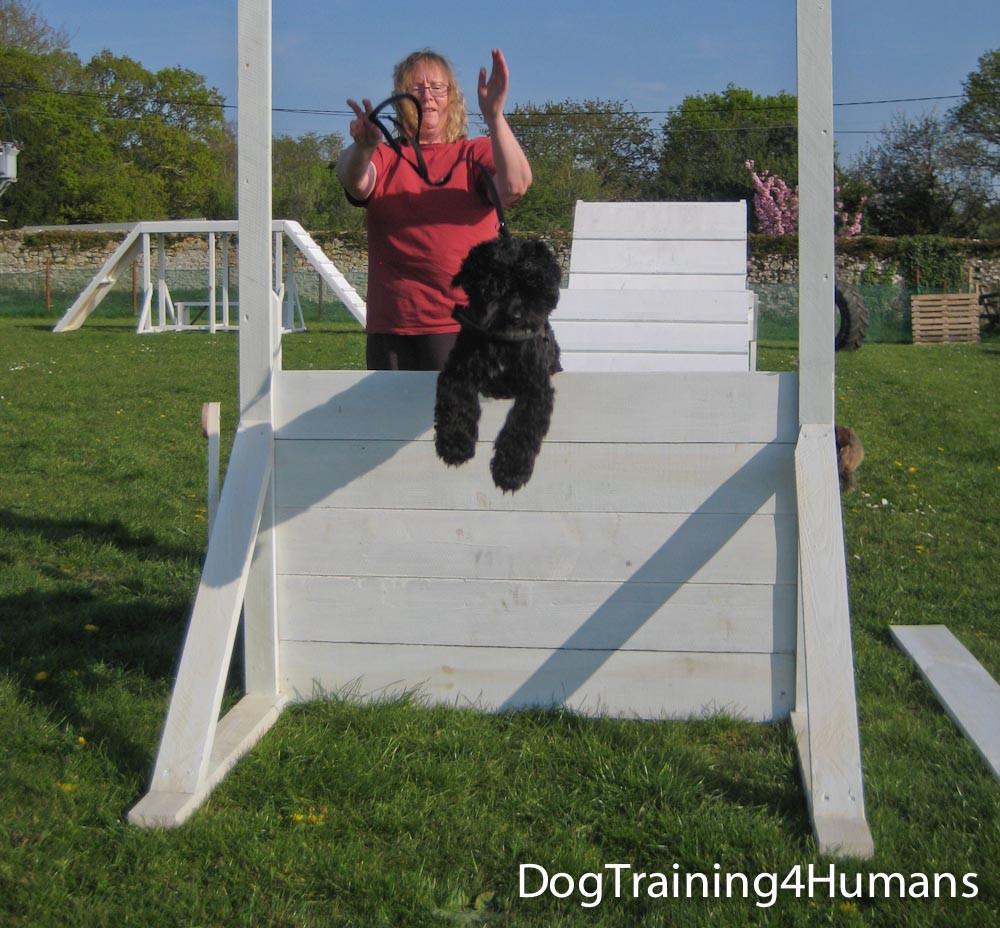 DogSchool (1 of 1)-464.jpg