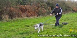 DogSchool (1 of 1)-50.jpg