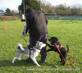DogSchool (1 of 1)-84.jpg