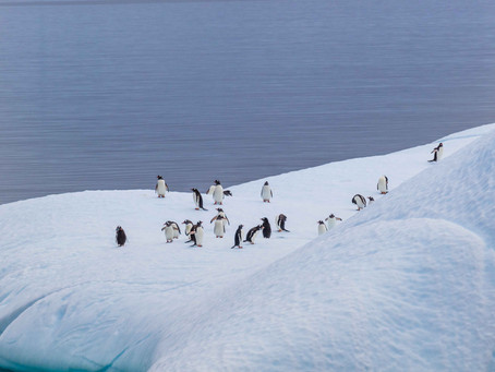 They Take Visa in Antarctica