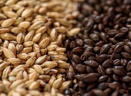 Hoptimalt présente les grains : L'Orge & son Histoire