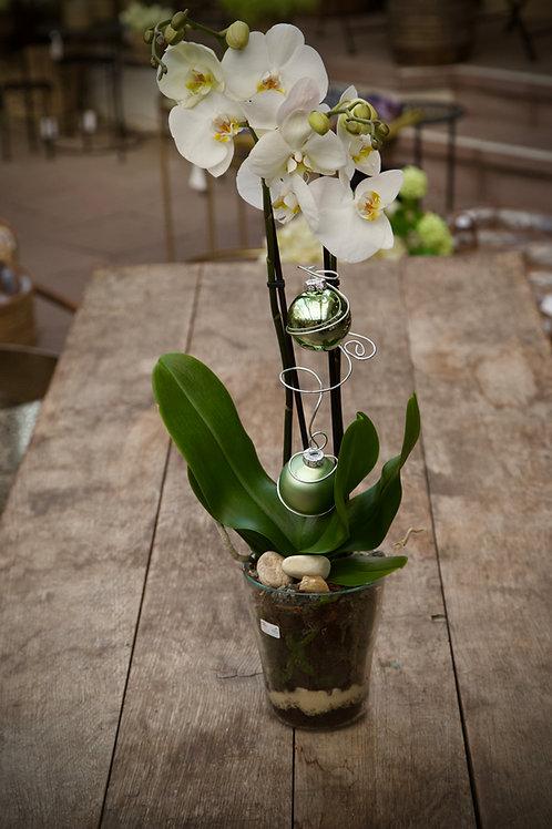 Orchideen-Glas