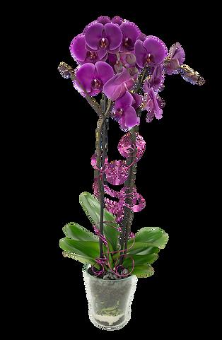 Glas Hasenwinkel (Orchidee dekoriert)