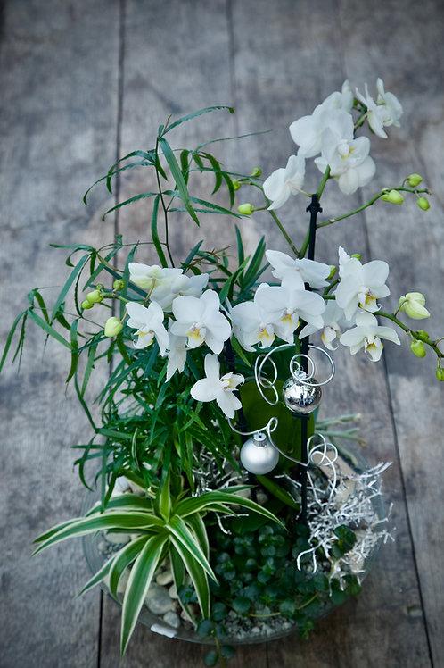 Orchideen-Schale