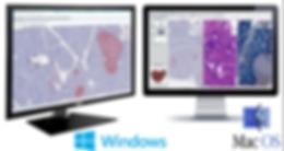 digital pathology viewer