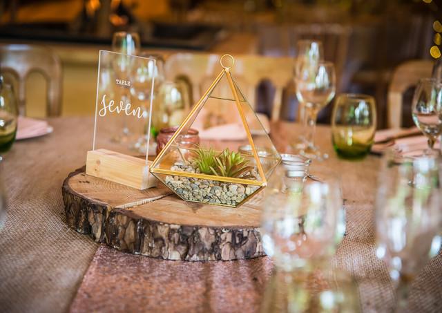 Log Slice, Brass and Glass