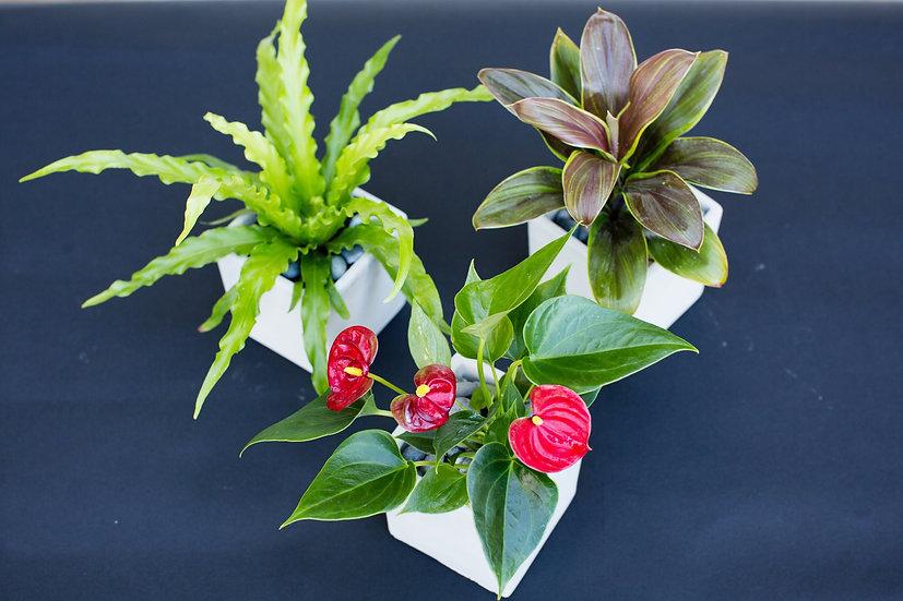 Trio of Mini Size Potted Plants