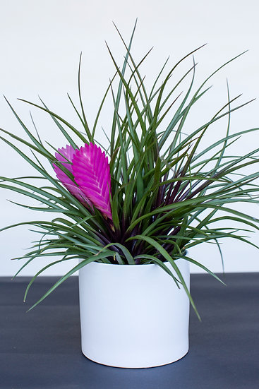 Gift Size Potted Plant