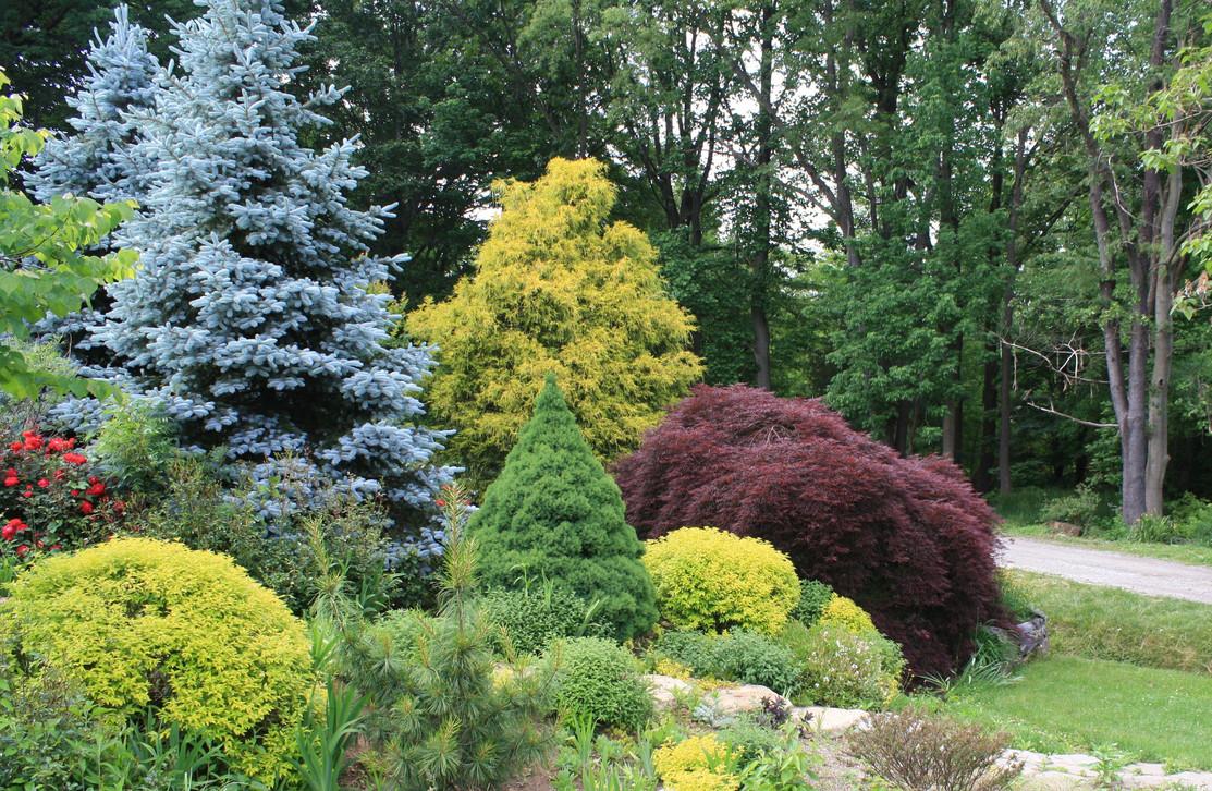 Elizabeth Gardens 1 (1).JPG