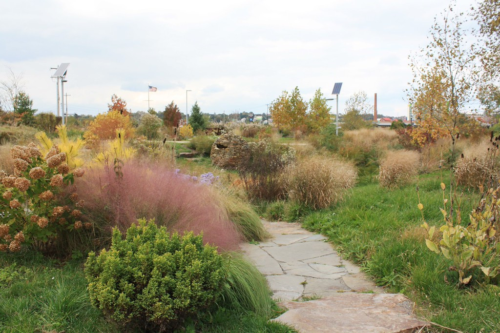 Wildlife Refuge Grasses.jpg