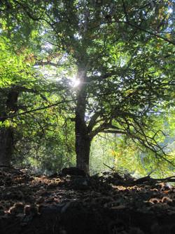 24-quiqui-lamothe-creatrice-designer-de-robes-de-mariees-de-provence-bohème-chic-nature-bio-ecologiq
