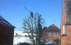 tree surgeon leamington spa