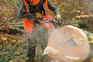 tree surgeons in warwickshire
