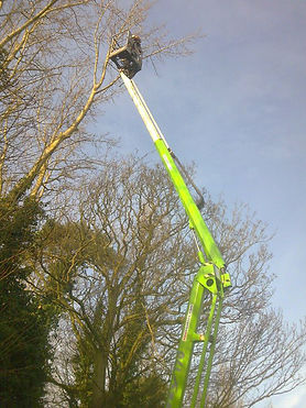 Tree Surgeons in Leamington Spa