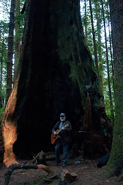 Big Tree Resonator