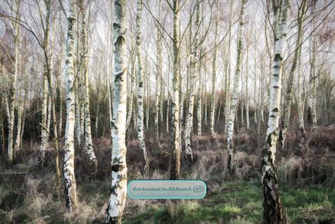 trees4compressed.jpg