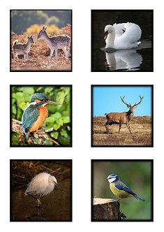 British Wildlife Deluxe Coaster (Glass) Set of 6