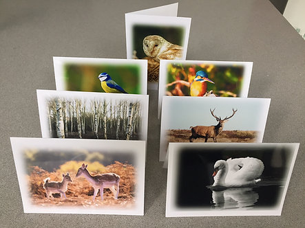 A6 size Greeting Card Nature