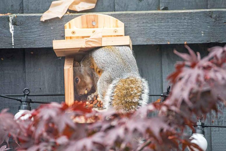 squirrel-in-feeder.jpg
