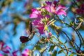 hummingbird flower hover flighe Jamaica