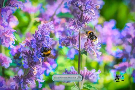 Purpleflowerbeeweb.jpg