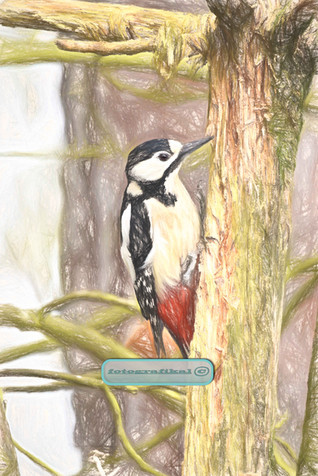 Woodpecker-on-small-tree.jpg