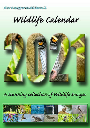 Wildlife-front2.jpg