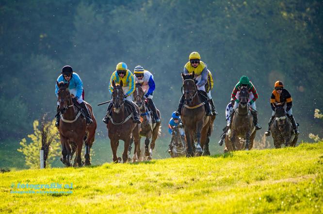 Dingley Races Backlight