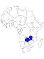 ZAMBIE.jpg