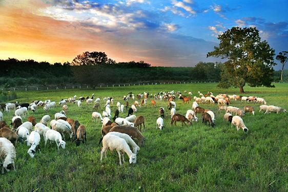 UK-Farm-Pic1.jpg