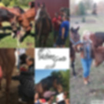 Team building and leadership with horses