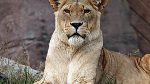 ¿Mamá leona?