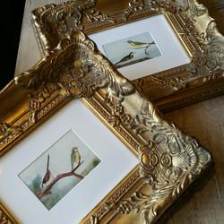 Framed Victorian Bird Prints