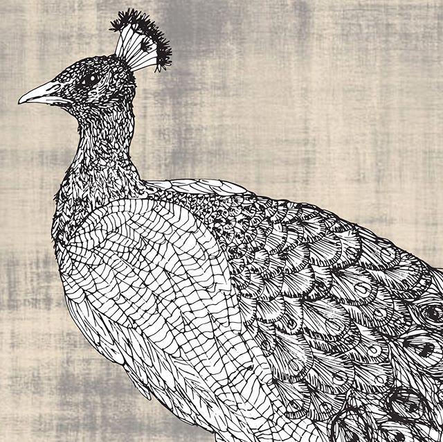 The ever inspiring peacock