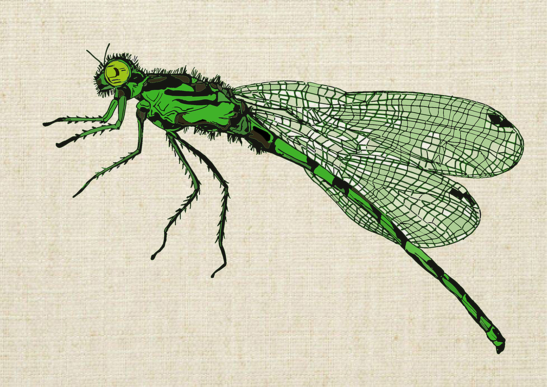 dragonflyGreenWEB