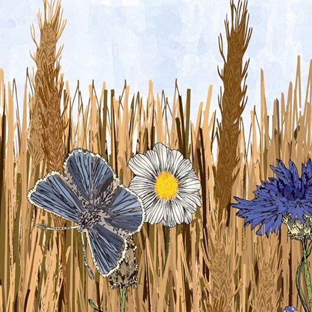 Fields of flowers and butterflies 🦋 #pe