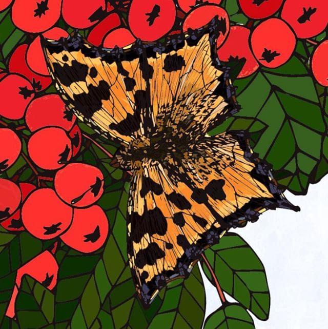 #butterflies #tortoiseshell #wings #berr
