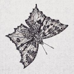 Beautiful butterflies..