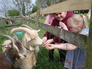 Our new young goats welcoming our first visitors of the year